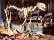 Mission Science Spook-shop: Skeletons, Eyeball Dissection & DIY Workshops | SF