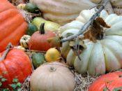 2019 St. Anne of the Sunset Parish Harvest Festival | Oct. 25-27