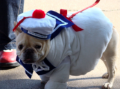 Howloween Doggie Costume Party & Drink Specials | Pier 23 Cafe