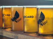 Wildcard Brewing Grand Opening: Free Pint Glasses & Drink Specials | Albany