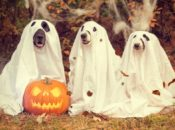 2019 DogFest Bay Area: Halloween Doggy Festival | Oakland