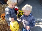 Free Halloween Trick or Treat Trail, Goodies & Raffle | Hayes Valley