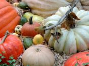 Harvest Festival: Silent Auction, Carnival Games & Raffle | SF