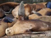 Sea Lion Stroll: Scenic Waterfront Walk & Wharf History | Pier 39