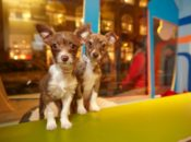 Macy's Holiday Windows & Adorable Puppies & Kittens: Final Day | Union Square