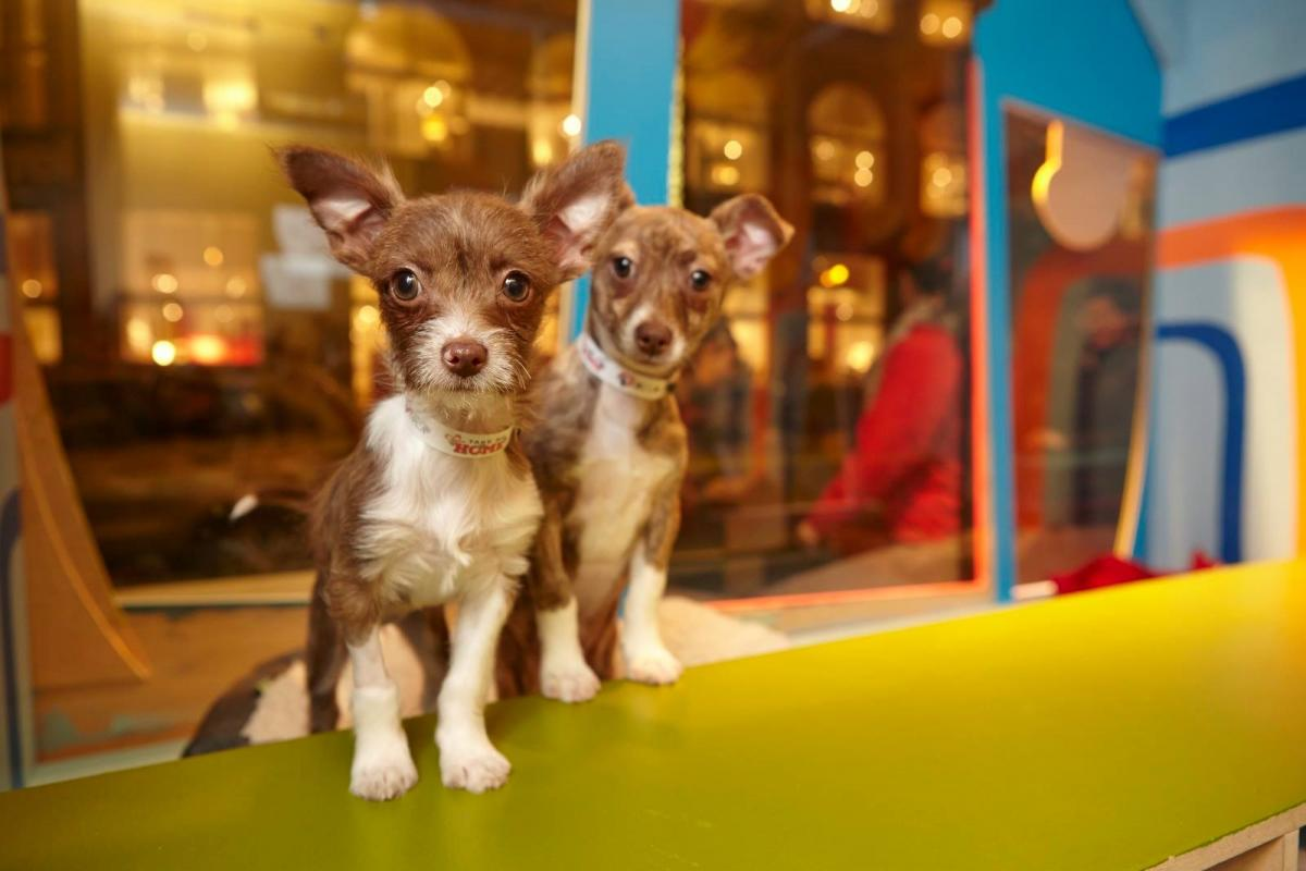 Macys Christmas Windows 2019 Macy's Holiday Windows & Adorable Puppies & Kittens: Final Day