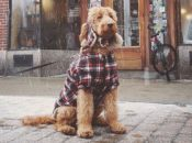 """2019 """"Plaid Friday"""" Oakland Local Shopping Day 