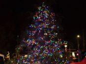 2019 Holiday Tree Lighting: Wine Stroll & Horse-Drawn Carriage Rides | Saratoga