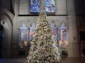 "World's Largest Origami Tree: ""Tree of Hope"" Lighting 