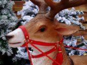 24 Holidays on 24th Street: Photo w/ Santa & Rudolph | Noe Valley