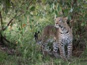 Wildlife Photography Gets Wild Art Exhibition & Reception | Berkeley