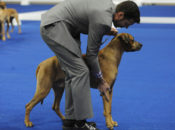 2019 Golden Gate Kennel Club Dog Show | Cow Palace