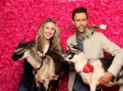 Valentine's Day Goat Party: Seriously, Party w/ Cuddly Little Goats | SF