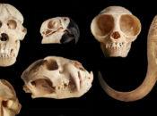 NightLife & Death | California Academy of Sciences