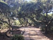SF's Brand New Trail in Golden Gate Park | Bay Area Ridge Trail