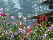 Spring Equinox Ceremony | SF Zen Center