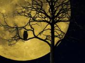 Night Owl Ceremony | Immersive Design Week