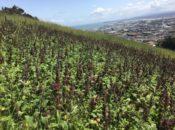 Sign Hill Hike: Pretty Vistas, Butterflies & Wildflowers | South SF