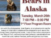 Brown Bears in Alaska w/ Wildlife Photographer | Mountain View