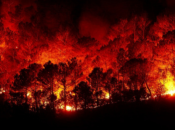 California Wildfires Benefit Poetry | Green Apple Books