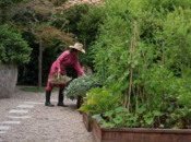 Free Author Talk: A Garden Can Be Anywhere by Lauri Kranz | Omnivore Books