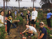 UC Gill Tract Community Farming Party | Albany