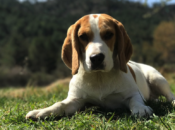 Dog Park Clean-up: SFDOG's Scoop de Doo | SF