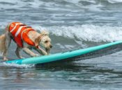 2020 World Dog Surfing Championships | Pacifica