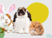 2019 PetSmart's Free Pet Photos with the Easter Bunny