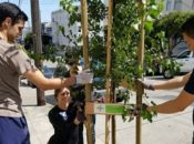 "Make SF More Green: ""Friends of the Urban Forest"" Tree Planting 