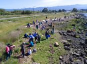 Earth Day: Cal Alumni Day of Service 2019 | Berkeley
