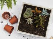 National Public Gardens Week: DIY Mini Succulent Garden | East Bay