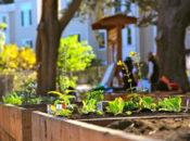 SF's Garden Resource Day: Free Compost/Mulch/Plants | 2019