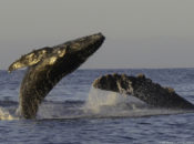 When Whales Win, Everyone Wins: A Study on Whales | Sausalito
