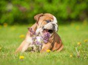 Mimosas and Animal Behavior Myth-Busting | SF SPCA