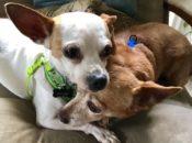 Foster Fest Yappy Hour w/ Nobody's Perfekt Dogs | San Leandro