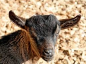 Green Solstice Happy Hour & Goat Party | SF