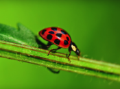 Bug Day: Family Day at the Garden | Berkeley