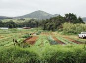 Free Author Talk: Revitalizing Hawaii Foodways | Omnivore Books