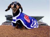 24th AnnualWienerschnitzel Wiener National Dog Race | Sacramento
