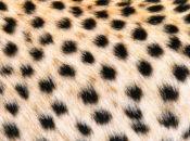 Animal Behavior NightLife | California Academy of Sciences