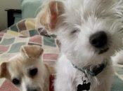 Foster Fest Yappy Hour w/ Nobody's Perfekt Dogs   San Leandro