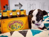 Family Dog Rescue Adoption Party | Anchor Public Taps