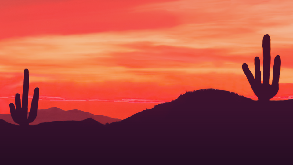 Desert NightLife | California Academy of Sciences