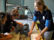Community Free Days at Seymour Marine Discovery Center | Santa Cruz