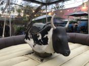 Zeitgeist's Free Summer Bull Ride Competition | SF