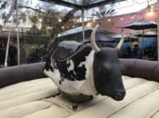 Free Zeitgeist Bull Rides