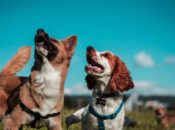 """2019 """"Bark in the Park"""": Largest Dog Fest in USA   San Jose"""