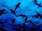 Sharktoberfest NightLife at Cal Academy of Sciences | SF