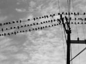 "Lafayette Park Movie Night & Free Popcorn: ""The Birds"" | SF"